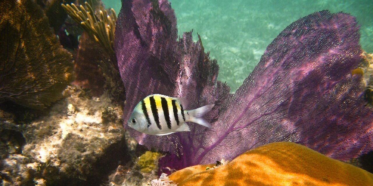 Dry Tortugas National Park Marine Wildlife Tourism