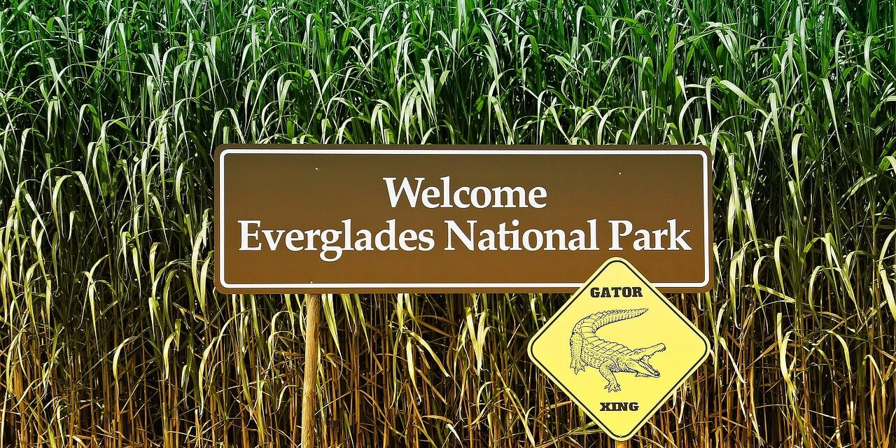 Everglades National Park- Information and Tips