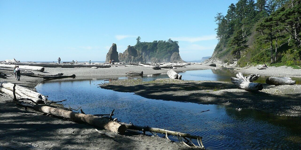 The Ultimate Wildlife Tour to Olympic National Park