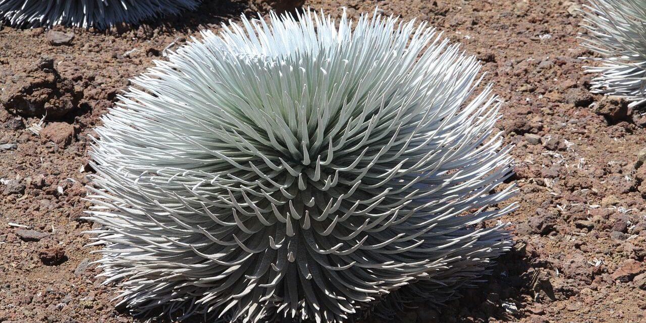 Haleakalā National Park- A Unique Beauty