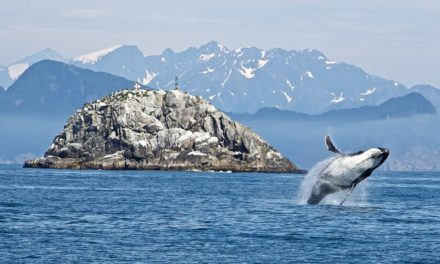 Kenai Fjords National Park- An Adventure Tour