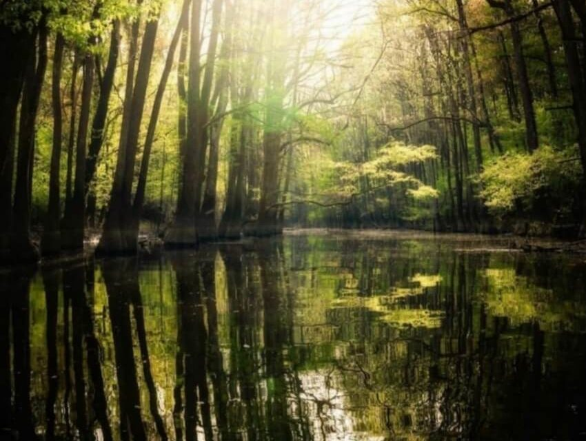 Congaree National Park: Information and Guide