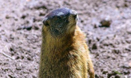 Grand Teton National Park Wildlife Tour