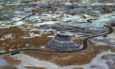 Petrified Forest National Park- Information and Tips