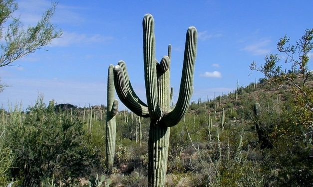 All About Saguaro National Park