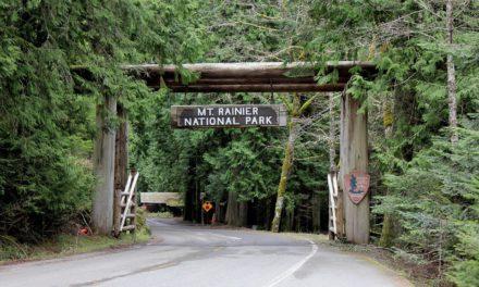 A Guide to Mount Rainier National Park