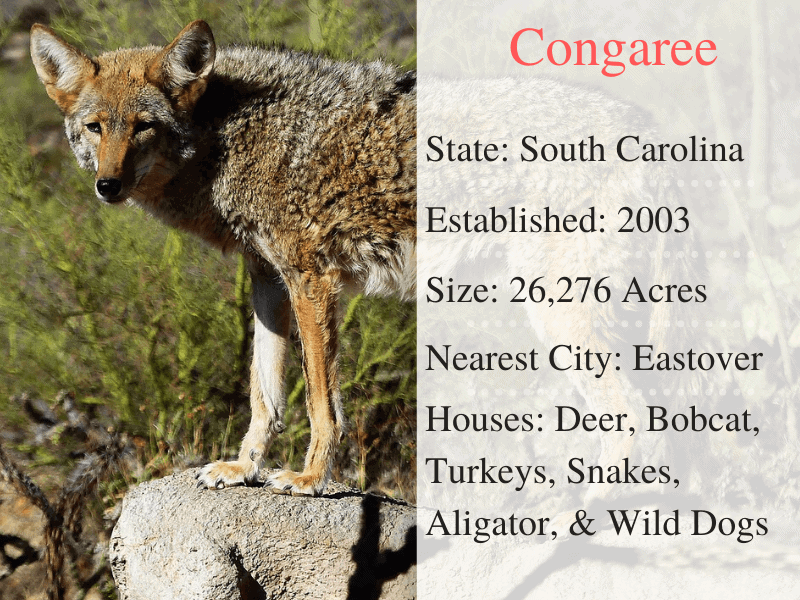 Congaree National Park Facts