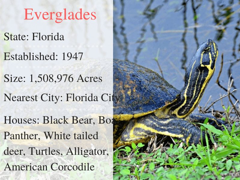 Everglades National Park Facts